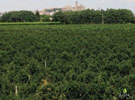 Imatge de la notícia La Paeria amplia el termini d'aportacions a la futura Ordenança de l'Horta