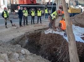 Imatge de la notícia La Paeria trasplanta els castanyers de la plaça Ramon Berenguer IV