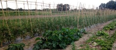 Obert un nou període per sol·licitar una finca professional al Viver d'Agricultors de Rufea