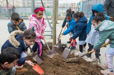 Els centres educatius amb les plantacions d'arbres a la ciutat