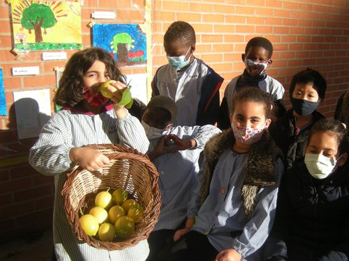 Imatge de la notícia Collita de llimones a la nostra escola