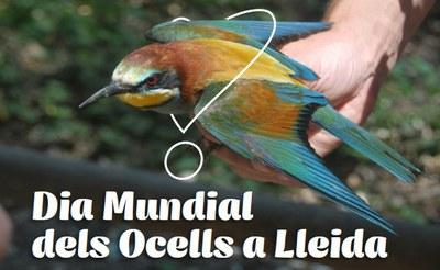 Imatge del event Dia Mundial dels ocells als Aiguamolls de Rufea - Diumenge, 6 d'octubre 2019
