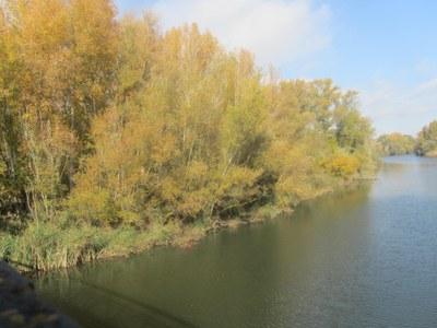 Punt d'observació +Biodiversitat. Els ocells del riu