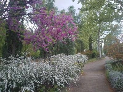 Punt d'observació +Biodiversitat. Vegetació de parcs i places de la ciutat