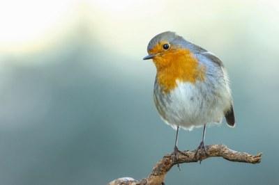 Imatge del event TALLER. Iniciació a la fotografia de fauna: com aproximar-nos als ocells.