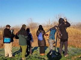 Imatge de la notícia Cens d'ocells hivernants als espais humits de Lleida