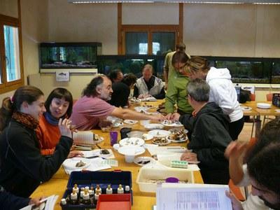 Curs d'introducció a la micologia a la Mitjana