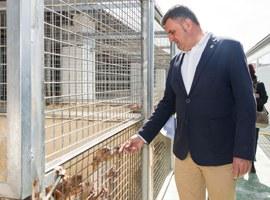 Imatge de la notícia El 80 % dels animals recollits per la Canera Municipal els recuperen els propietaris o bé s'adopten