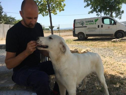"""Imatge de la notícia """"El Refugi dels Peluts"""", nou nom per al Centre d'Acollida d'Animals de Companyia de Lleida"""