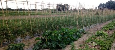 El Viver d'Agricultors de Rufea incorpora dos nous projectes ecològics amb component social