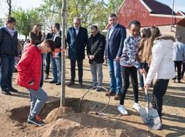 Imatge de la notícia Els alumnes de l'Escola de Magraners planten els arbres de la reforma del pati que ells mateixos van idear
