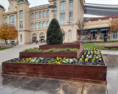 Els serveis de Jardineria planten més de 3.200 flors en diferents espais de la ciutat