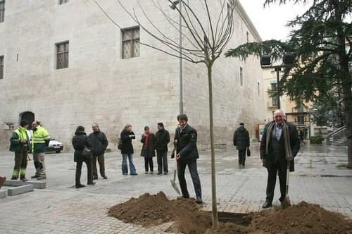 Imatge de la notícia L'Ajuntament de Lleida inicia la campanya de plantació d'arbres