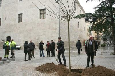 L'Ajuntament de Lleida inicia la campanya de plantació d'arbres