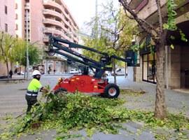 L'Ajuntament de Lleida porta a terme una esporga selectiva per aconseguir l'òptima il·luminació dels carrers i places