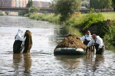 La neteja del riu Segre acaba amb la retirada de 40'6 tones de macròfits