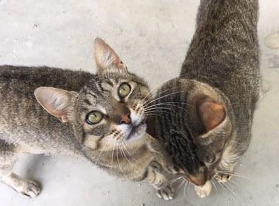 La Paeria començarà al setembre el cens de colònies de gats a la ciutat