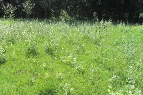 Imatge de la notícia La Paeria inicia una prova per a la gestió sostenible dels prats de La Mitjana