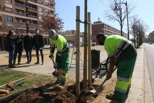 Imatge de la notícia La Paeria ja ha plantat dues terceres parts dels 776 arbres previstos