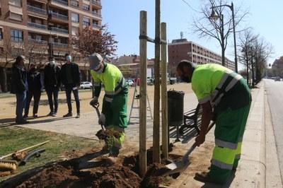 La Paeria ja ha plantat dues terceres parts dels 776 arbres previstos