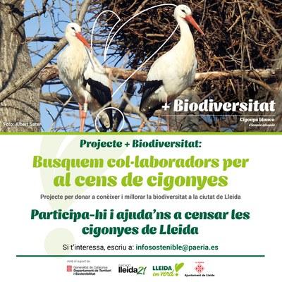 La Paeria reprèn el cens de cigonyes a Lleida amb col·laboració de 33 unitats familiars, després de l'aturada de fa un any per la pandèmia