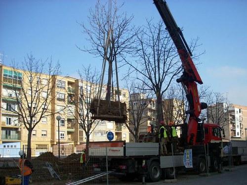 Imatge de la notícia La Paeria trasplanta 5 arbres del parc del cobriment de les vies