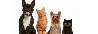 La reunió del grup motor per a la creació del Consell Municipal per a la Defensa dels Animals tindrà lloc el dia 19