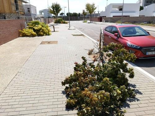 Imatge de la notícia La tempesta de divendres al vespre tomba més de 40 arbres