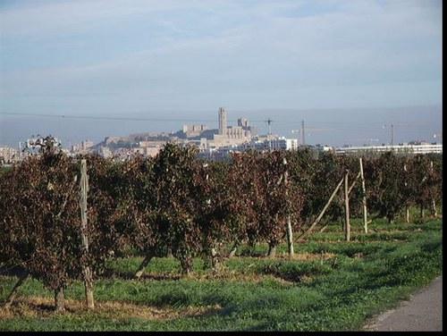 Imatge de la notícia La Paeria inicia un programa de foment de l'agricultura ecològica