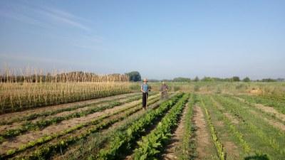 """Portes obertes del projecte agrosocial """"La Cristaleria germina"""" als horts de Rufea"""