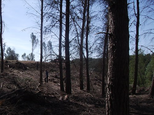 Imatge de la notícia Treballs de neteja forestal i prevenció d'incendis a la Cerdera