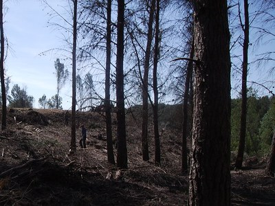 Treballs de neteja forestal i prevenció d'incendis a la Cerdera