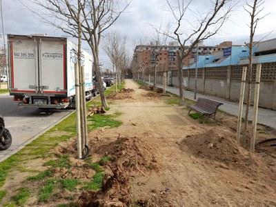 Treballs de replantació d'arbres a Pardinyes i Balàfia
