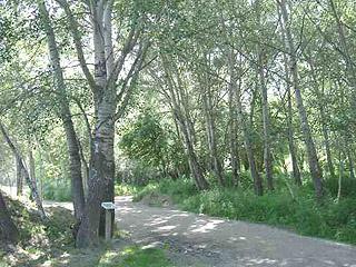 Resultat d'imatges de arbres mitjana Lleida