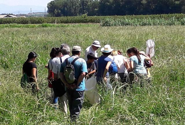Ecodescoberta sobre els insectes de Lleida