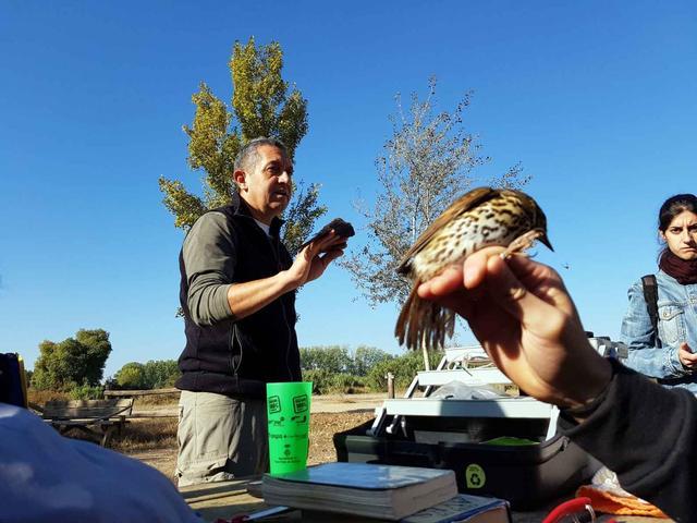 Estació d'anellament d'ocells a Rufea