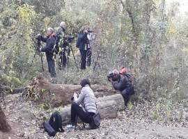 Èxit del curs de macrofotografia de natura al Parc Municipal de la Mitjana