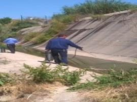 Imatge de la notícia L'Ajuntament de Lleida inicia els treballs de control de mosquits i altres insectes voladors a la ciutat