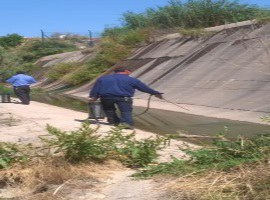 L'Ajuntament de Lleida inicia els treballs de control de mosquits i altres insectes voladors a la ciutat