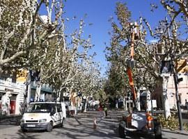 L'Ajuntament de Lleida realitzarà treballs d'esporga en 14.500 arbres amb motiu de la campanya d'hivern 2017/2018