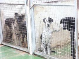 Imatge de la notícia La Paeria adjudica les obres de rehabilitació del Centre d'Acollida d'Animals de Companyia de Lleida