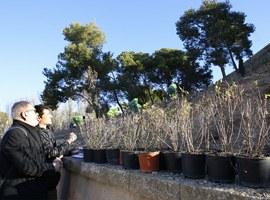 La Paeria millora l'enjardinament del talús de la Llengua de Serp, al Turó de la Seu Vella, amb 5.700 plantes
