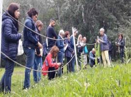 Les Ecoactivitats estrenen un taller per identificar les plantes silvestres comestibles, collir-les i cuinar-les