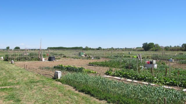 Tres nous professionals s'incorporen al Viver d'Agricultors de Rufea