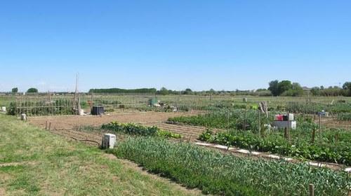 Imatge de la notícia Tres nous professionals s'incorporen al Viver d'Agricultors de Rufea
