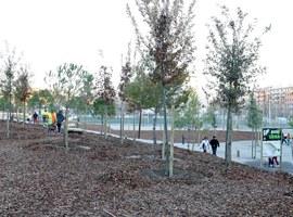 Imatge de la notícia Plantada d'arbres al nou bosc urbà de Lleida, a Balàfia